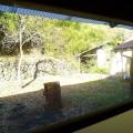 古民家から裏庭を見る